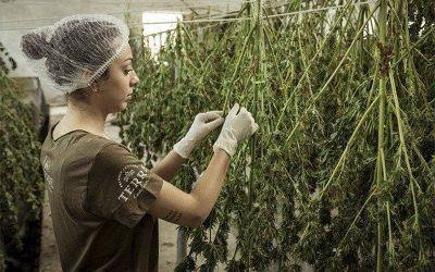 La Propiedad Intelectual y el Cannabis Medicinal en Colombia